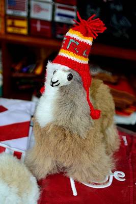 Sheep - LIMA -  Peru by Carlos Mora