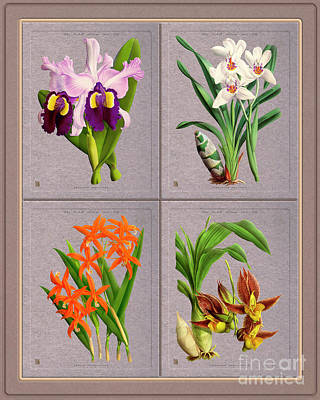 Travel Rights Managed Images - Orchids Quatro Classic Collage Royalty-Free Image by Baptiste Posters