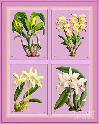Studio Grafika Zodiac Rights Managed Images - Orchids Quatro Collage Royalty-Free Image by Baptiste Posters