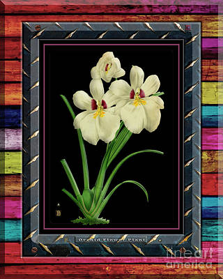 Stellar Interstellar Royalty Free Images - Orchid on Rusty Metal and Colored Weathered Planks Royalty-Free Image by Baptiste Posters