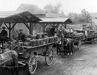Bringing The Outdoors In - 1923 Hauling Tomatoes  Salem New Jersey by Celestial Images