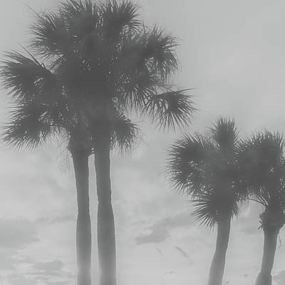 Vermeer Rights Managed Images - Abstract Palms Royalty-Free Image by Aaron Geraud