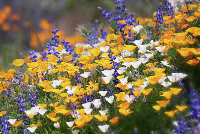 Photograph - Arizona Wildflowers  by Saija Lehtonen