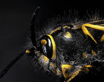 Insect Photograph - Assorted Location And Studio Shoots by Digital Camera Magazine