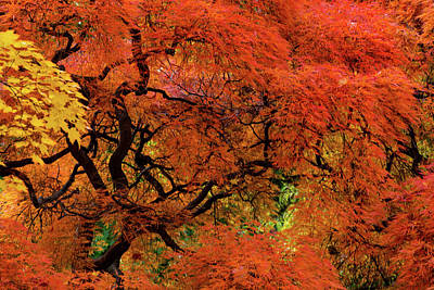Keith Richards - Autumn Colors by Stewart Helberg