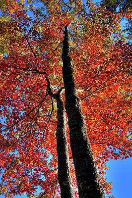 Photograph - Autumn Reds by David Patterson