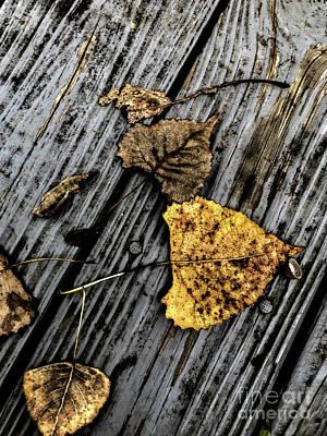 Photograph - Autumn by William Norton