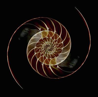 Balance Photograph - Chamber Nautilus Shells by Paul Taylor