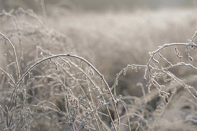 Garden Fruits - Close-up of herbs plants weeds covered with frost by Elisabetta Poggi