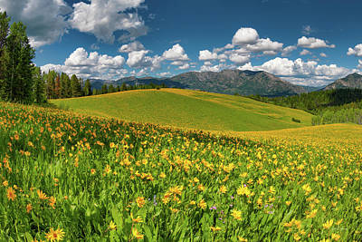 Photograph - Colorful Spring Meadow by Leland D Howard