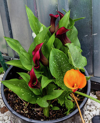 Photograph - Colourful Garden Flowers Brighten Up The Houses, Ranui, Auckland by David Butler