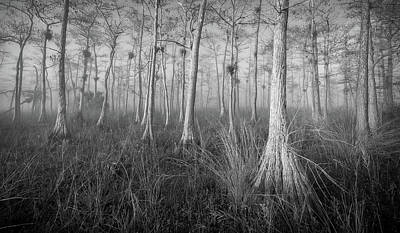 Photograph - Cypress by Bill Martin
