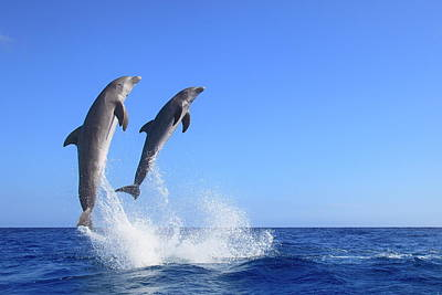 Photograph - Dolphins by J & C Sohns