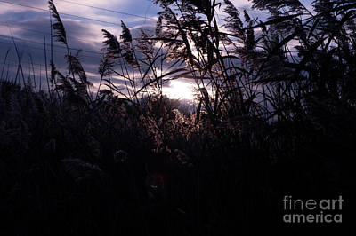 Photograph - Dusk by Jenny Potter
