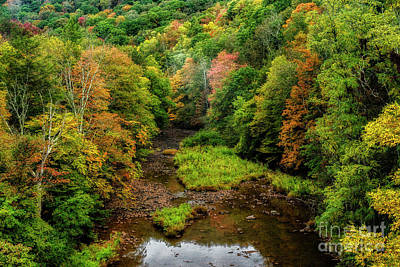 Photograph - Early Autumn Along Williams River by Thomas R Fletcher