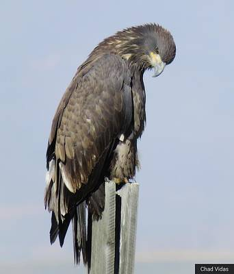 Eagles Moment Original