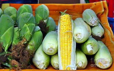 Photograph - Fresh Corn Cobs by Yali Shi
