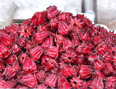 Photograph - Fresh Rosella Fruit by Yali Shi