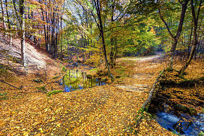 Photograph - Golden River by Evgeni Dinev