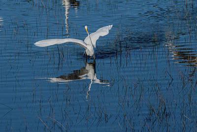 Photograph - Graceful Bird by Dan Friend