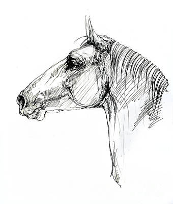 Animals Drawings - Horse head by Angel Ciesniarska