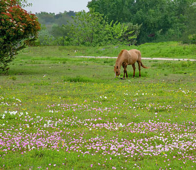 Photograph - Horse In Wildfowers by Brian Kinney