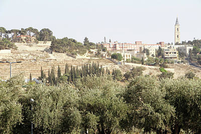 Photograph - Jerusalem Olive Trees by Munir Alawi