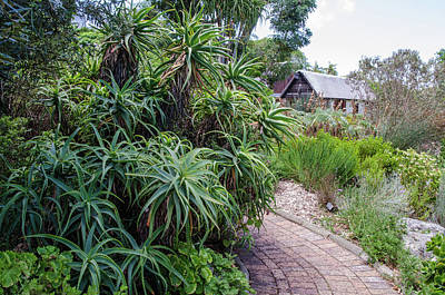 Photograph - Kirstenbosch National Botanical Garden by Rob Huntley