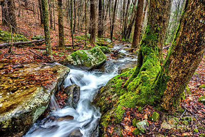 Photograph - Little Laurel Branch Waterfall by Thomas R Fletcher