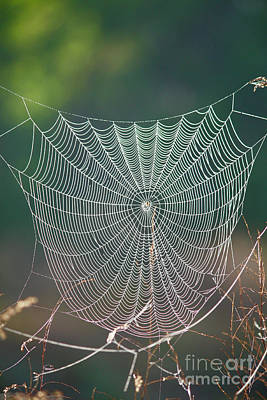Photograph - Marsh Spider Web by Carol Groenen