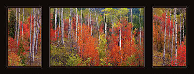 Photograph - Mountain Of Color by Leland D Howard