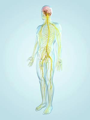 Nervous System, Artwork Art Print by Sciepro
