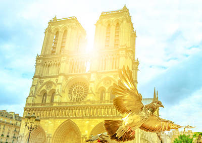 Photograph - Notre Dame Pigeon Flight by Benny Marty