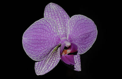 Photograph - Orchid by Larah McElroy