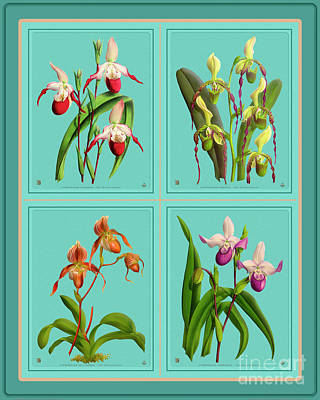 Mixed Media Royalty Free Images - Orchids Quatro Collage Royalty-Free Image by Baptiste Posters