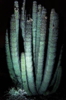 Photograph - Organ Pipe Cactus  by Saija Lehtonen