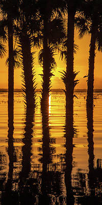 Photograph - Palm Tree Reflections by Stefan Mazzola