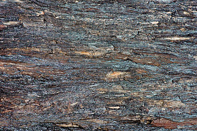 Photograph - Petrified Wood, Utah by William Mullins