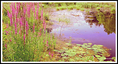 Photograph - Pond In Summer, Berkshire Mountains, Massachusetts by A Gurmankin