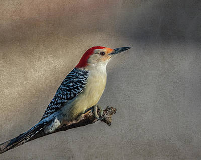 Photograph - Red Bellied Woodpecker by Cathy Kovarik