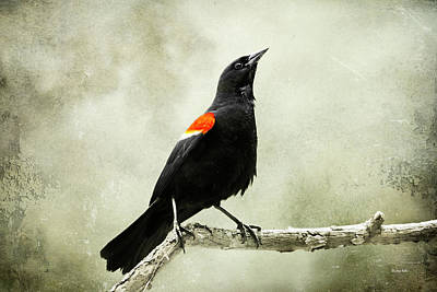 Photograph - Old Red Winged Blackbird by Christina Rollo