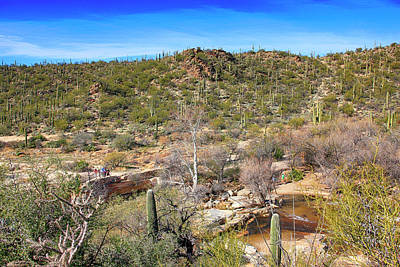 Photograph - Sabino Canyon Az by Chris Smith
