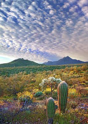 Photograph - Saguaro Cactus Carnegiea Gigantea And by Tim Fitzharris/ Minden Pictures