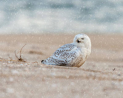 Photograph - Snowy Owl  by Cathy Kovarik