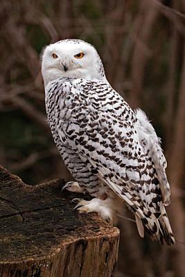 Kim Fearheiley Photography - Snowy Owl by Ira Marcus
