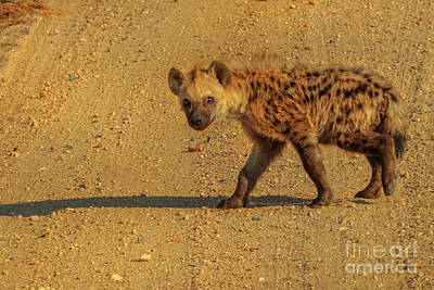 Photograph - Spotted Hyena Cub by Benny Marty