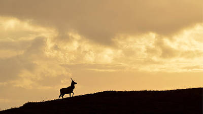 Photograph - Strathglass Silhouette by Gavin MacRae
