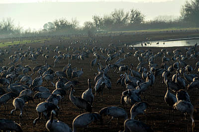 Photograph - Sunrise Over The Hula Valley by Dubi Roman