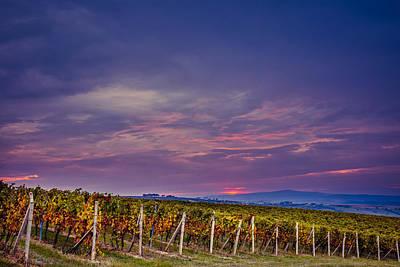 Lady Bug - Sunrise over the vineyards of South Moravia by Pavel Rezac