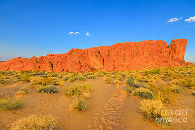 Photograph - Valley Of Fire by Benny Marty